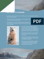 Polar Bears in Canada Nunavut Study