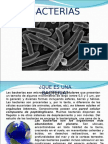 Bacterias Ppt