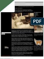 Alimentação dos gatos.pdf