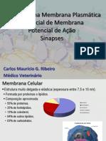 Aula 01 - Transporte na Membrana Plasmática Potencial de Membrana e Ação Sinapses