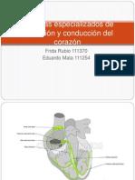 Sistemas especializados de excitación y conducción del corazón