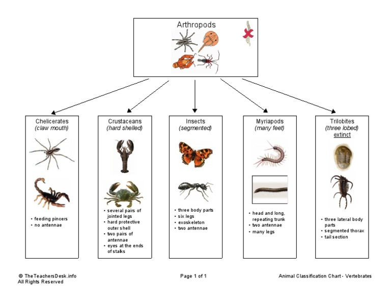 Animal Classification Chart