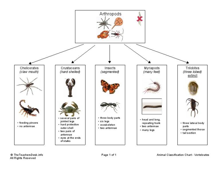 Animal Classification Chart Arthropods – Arthropod Worksheet