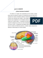 Atención y motricidad Funciones del cerebro