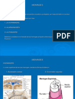 Anatomia de las Meninges