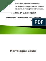 2cauleefolhas-110920073058-phpapp01