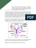 Fisiopatología nuevo
