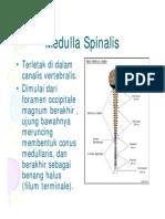 Cst125 Slide Medula Spinalis