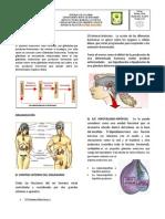 Sistema Endocrino 01
