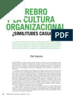 El Cerebro y La Cultura Organizacional