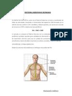 SISTEMA NERVIOSO HUMANO 2.pdf