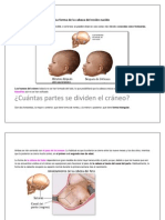 La forma de la cabeza del recién nacido