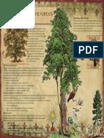 drvoENG