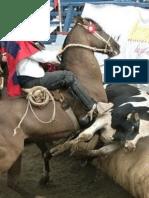 Mensaje en Rechazo Al Rodeo