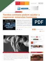 Www.megacurioso.com.Br Corpo Humano 30084 Tecidos Animais Podem Ajudar a Regener