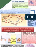 Cancer Biol