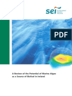A Review of the Potential of Marine Algae