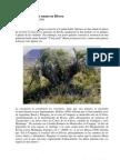 Butiá enana (Butia paraguayensis)