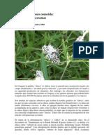 Chirca Chirca (Eupatorium Serratum)