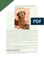 Alimentação Natural para Cães Idosos