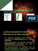 Evolucion Del Sistema Nervioso y Del Comportamiento