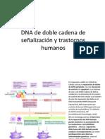 DNA de doble cadena de señalización y trastornos