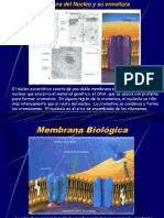 Estructura Del Nucleo y Su Envoltura