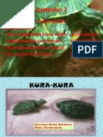 kajian Psikolinguistik kura-kura