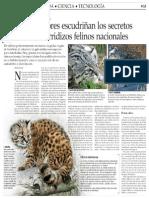 Investigadores escudriñan los secretos de los escurridizos felinos nacionales.pdf