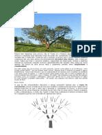 Desenhar uma árvore