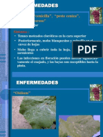 fitopatologia vid.ppt