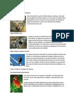 Flora y Fauna en Extincion
