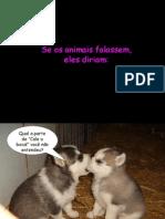 Seosanimaisfalassem1