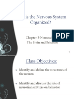 the neurons