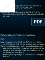 Light Reactions 1 Nf