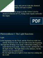 Light Reactions 1 Nf