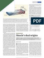 Muscle's dual origins