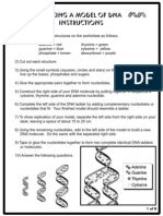 DNA Model (Cut-out sheet)
