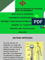 Sistema Nervioso - Copia