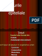 Epiteliie Rom
