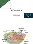 Carbohidratos-Lipidos-Metabolismo