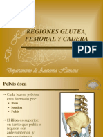 SEMANA 2-3 Regiones Glutea, Femoral y Cadera