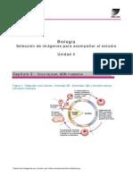 Mitosis Biologia Selec Imagenes u4 c2