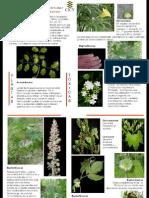 Plantas_Toxicas_CICY