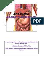 Sem 7 Anatomia Aparato Digestivo