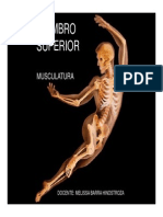 Anatomia 3.pdf