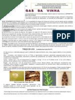 folheto_pragas_vinha_2012