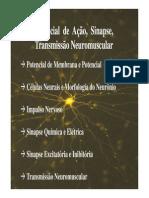 Potencial Sinapse e Jnm1