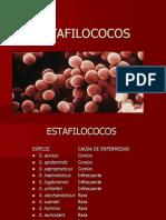 estafilococos-JJJJ