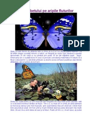 Iron butterfly (options strategy) - Wikipedia